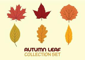 Autumn leaf collection set