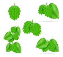 hops ripe and green beer preparation ingredient vector illustration