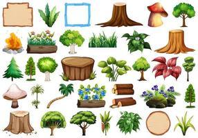 Conjunto de planta ornamental