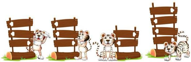 White tigers by the wooden sign vector