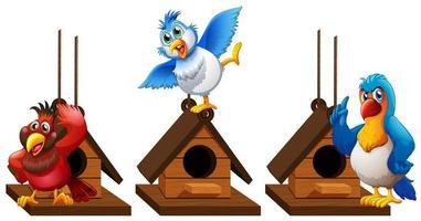 Three parrot macaw birds in birdhouse