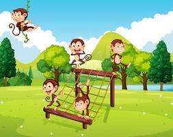 Monkeys playing on climbing station