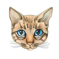 Cat face. Watercolor. Vector illustration. Thoroughbred cat.