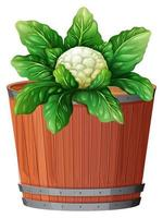 cauliflower in large pot