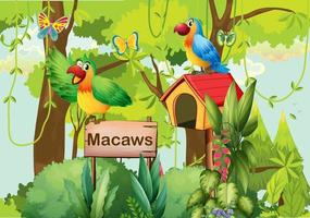 A forest with macaws, a signboard and mailbox