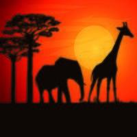 Pôr do sol na África com elefante e girafa