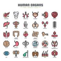 Human Organs Thin Line icons vector