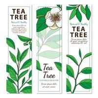 Tea Tree. Set of 3 vertical hand drawn web banners with herbs isolated on white background.