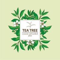 Tea Tree plant under white square frame. Hand drawn herbal background.