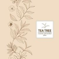 Tea Tree leaves and blossoms. Hand drawn herbal background.