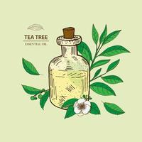 Tea Tree leaves and flower. Essential oil bottle illustration.
