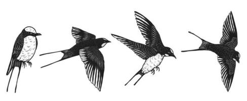 swallows set hand drawing