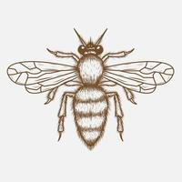 Bee hand drawing vector