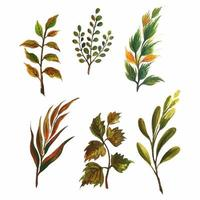 Set of various watercolor plants