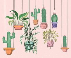houseplants in macrame hangers vector