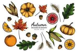 Collection set of autumn flower and leaves drawing