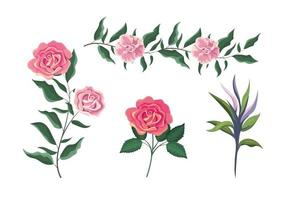 set exotic roses plants with leaves vector