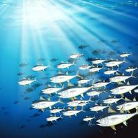 Escena submarina con banco de atún vector
