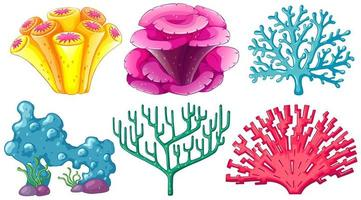 Different type of coral reef