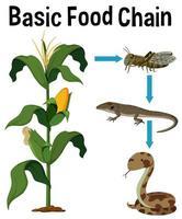 Cadena Alimentaria Básica de Ciencia vector