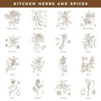 Kitchen herbs and spices. Vintage botany hand drawn set