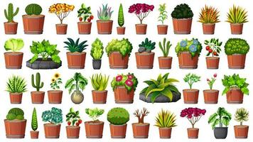 Collection of potted plants on white vector