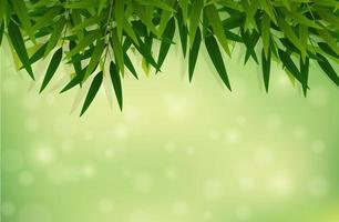 A green bamboo leaf background vector
