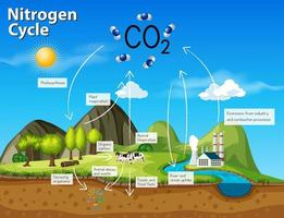 Science nitrogen cycle CO2 vector