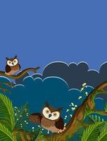 corujas em galhos de árvores