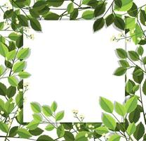 Beautiful green leaf border vector