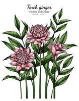Pink Torch ginger flower and leaf drawing
