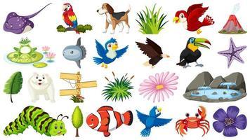 insieme di diversi oggetti di animali e natura