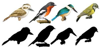 Set of colorful bird varieties