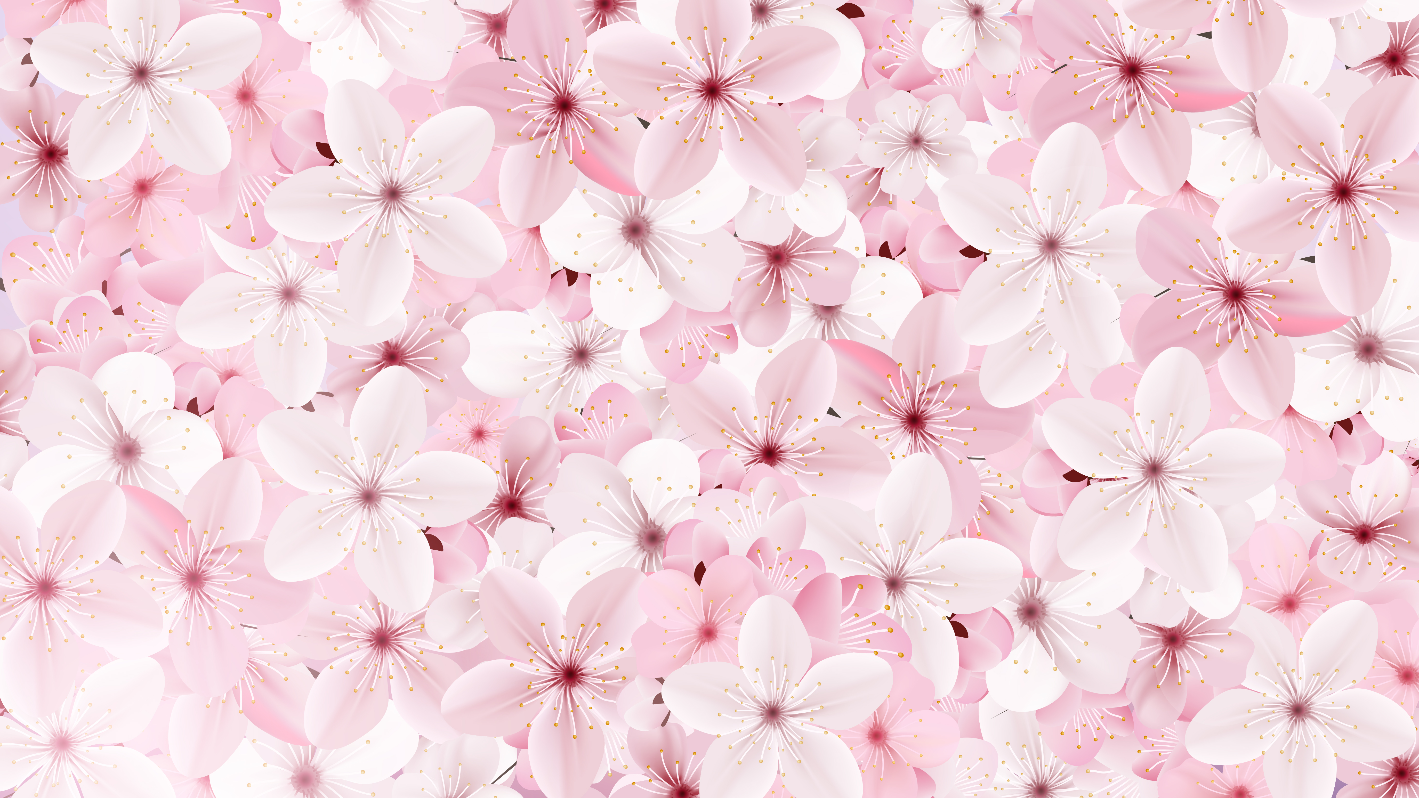 Blossoming Pink Sakura Flowers Background Download Free Vectors
