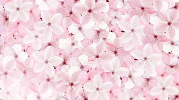 Blossoming pink sakura flowers background vector