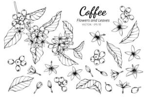 Collection of Coffee Flowers and Leaves