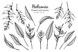 Collection of Heliconia flowers and leaves