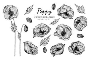 Collection of Poppy flowers, blossoms and leaves