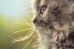 Retrato de adorable gatito desenfocado