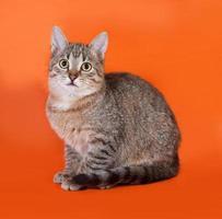 Tabby kitten sitting on orange photo