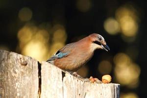 garden bird foraging for nuts