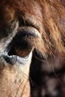 Brown horse eye and mane close up