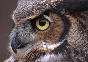 ojo de búho