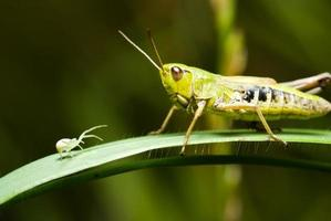 Grasshopper and spider
