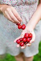 Hands full of sweet cherries