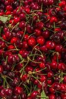 cherry tree photo