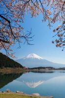Beautiful Mt. Fuji and Cherry blossom from a Tanukiko lake(Cherry blossom)