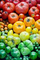 Fresh organic tomatoes photo
