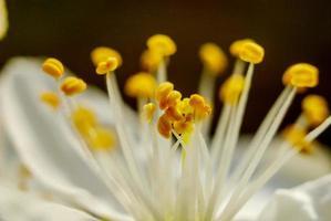 Beautifull subtle colors of a stamens, macro,