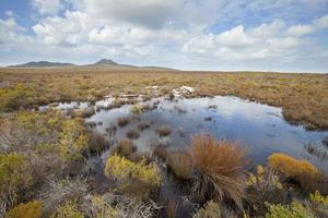 Fynbos vegetation